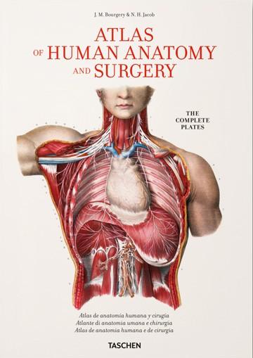 Fp - Atlas Of Human Anatomy...