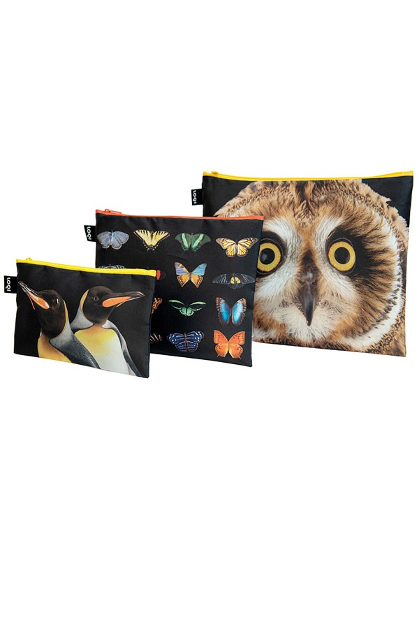 Owl, butterflies, penguins